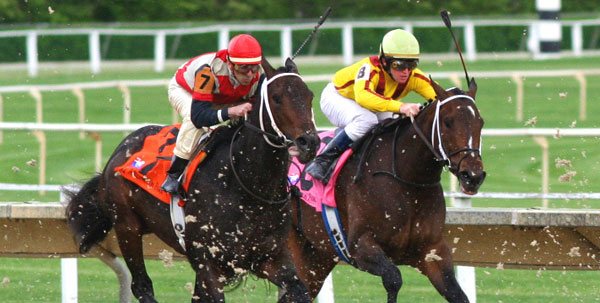 Two jockeys on thoroughbred horses racing at Saratoga Racetrack